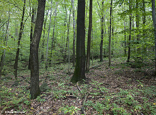 Deciduous Forest French Creek _A5E7759.jpg - 130456 Bytes
