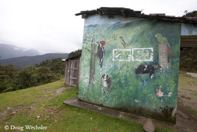 Bird paintings _A5E9522