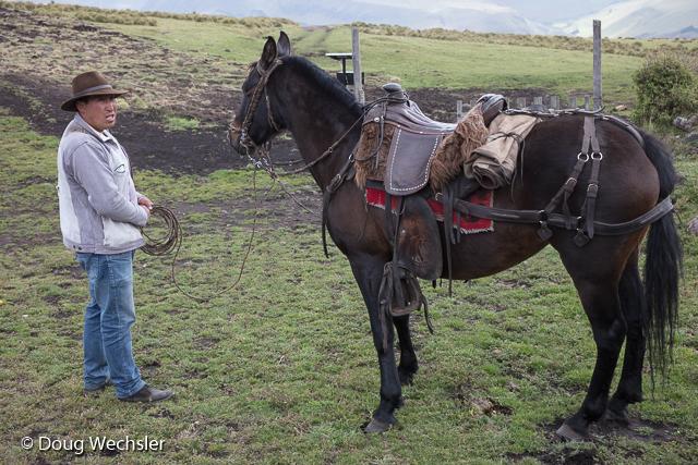 Fernando and horse