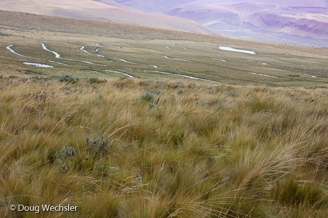 Wetland restoration in the paramo