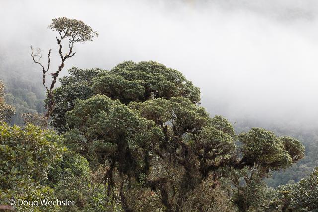 Cloud Forest - Tapichalaca