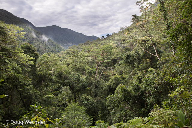 View from trail in Copalinga