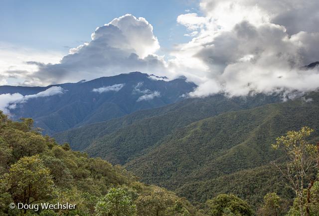 Cloud Forest, Tapichalaca Reserve