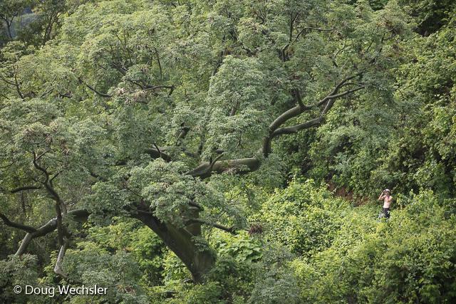 Ornithologist in Jorupe forest