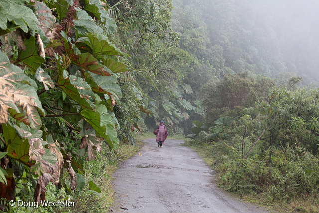 Inca Trail, Trocha Inca