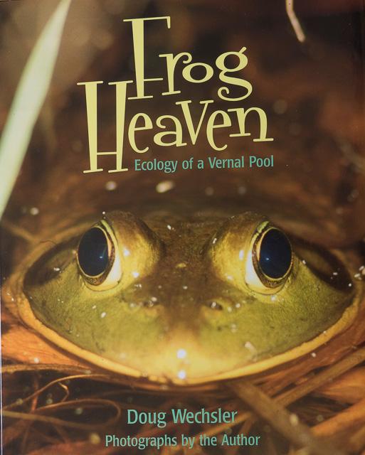 Frog Heaven children's book